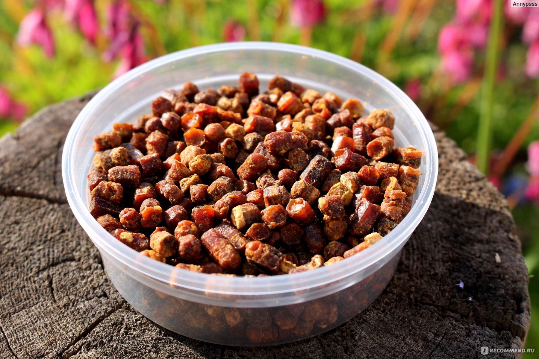 Перга пчелиная: описание, полезные свойства, применение