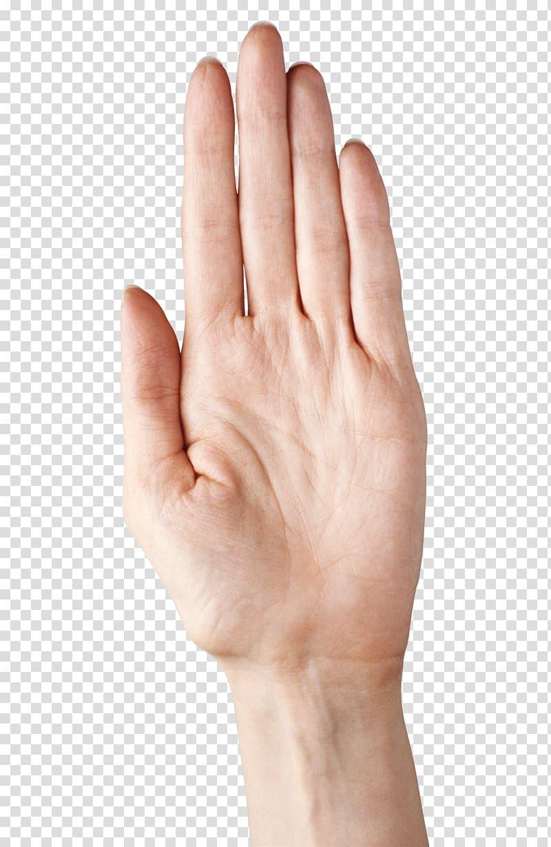 Рука — википедия. что такое рука