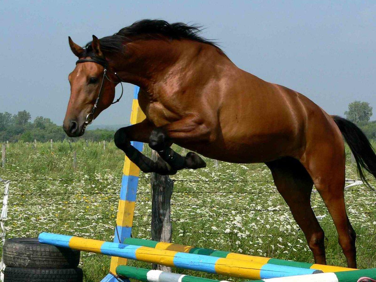 Как ходит конь в шахматах в картинках, как бьет конь + задачи
