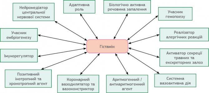 Что такое гистамин?