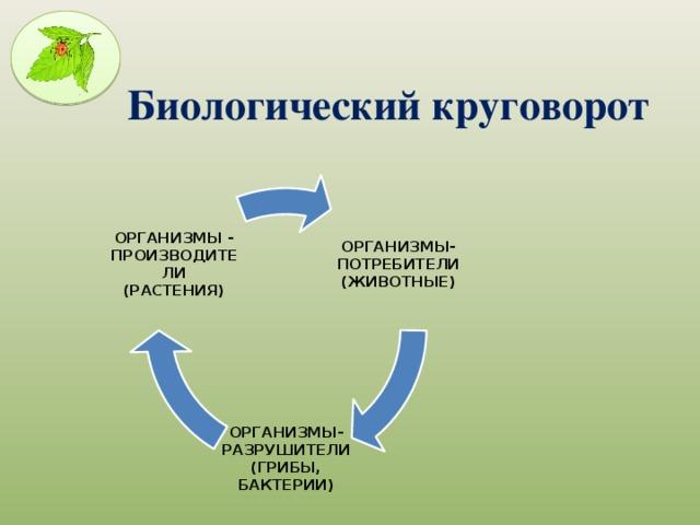 Биосфера. круговорот веществ в биосфере. глобальные изменения в биосфере.