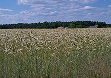 Отрасли сельского хозяйства: главные отрасли, их описание, развитие