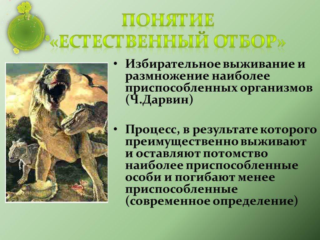 Естественный отбор (телеигра)