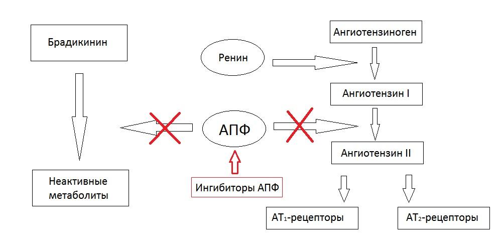 Что такое ингибиторы холинэстеразы, отравление которыми предполагают у алексея навального немецкие врачи - 1rre