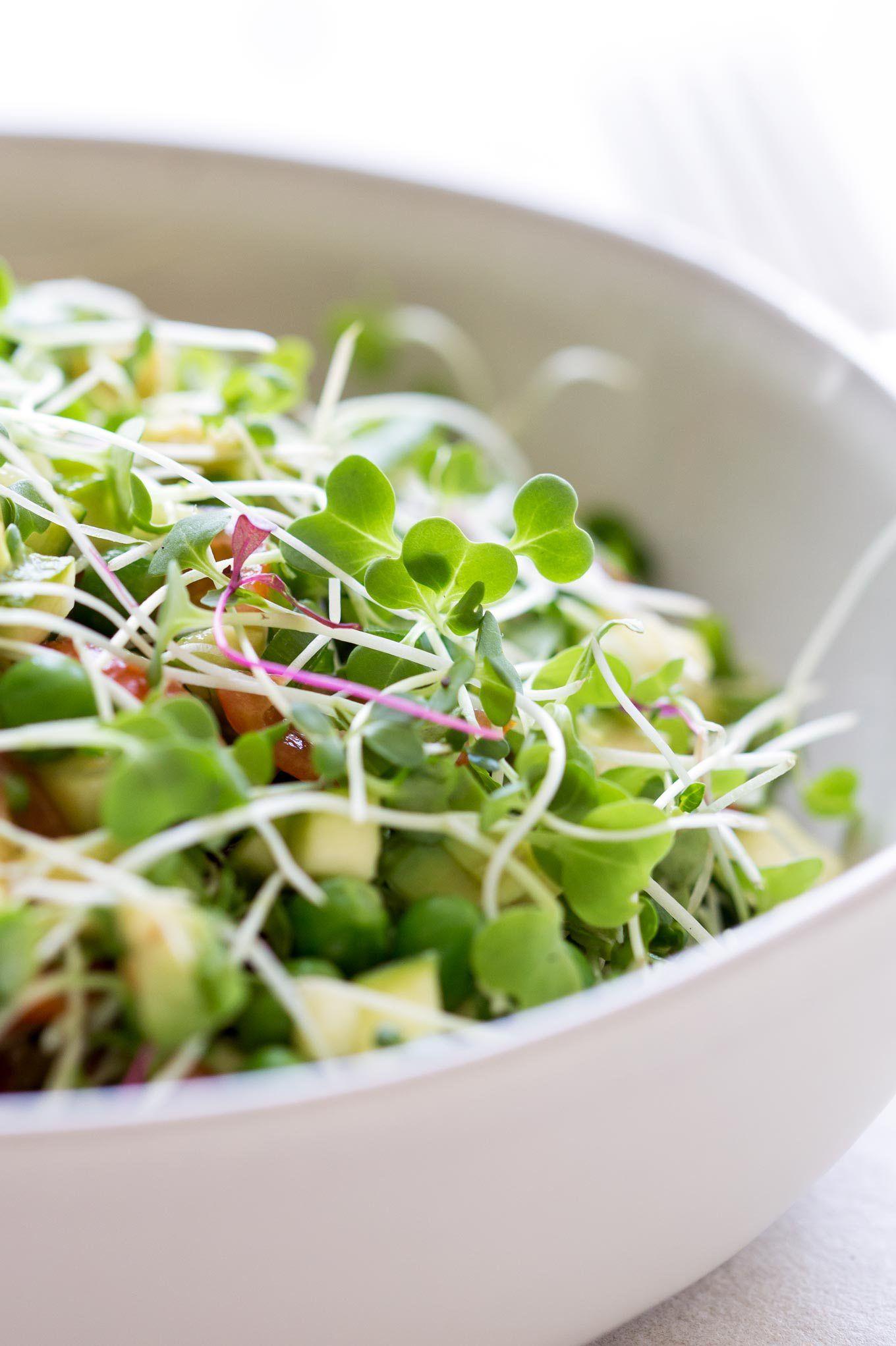 Микрозелень: польза, особенности выращивания в домашних условиях, виды, рецепты