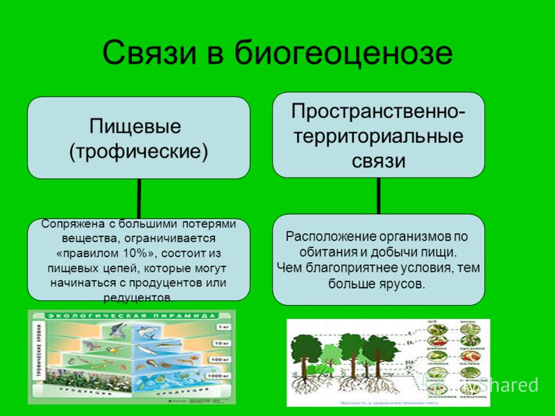 Что такое биоценоз – это в биологии: классификация и виды