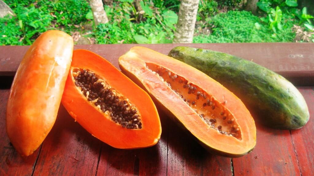 Фрукт папайя — полезные свойства для здоровья и красоты