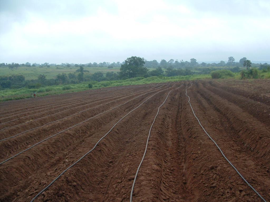 Орошение - это что такое в сельском хозяйстве? :: syl.ru