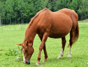 Виды лошадей фото и описание