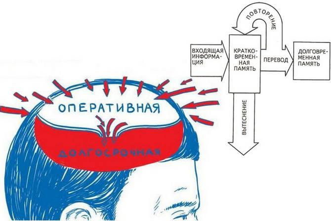 Память: психология, интересные факты