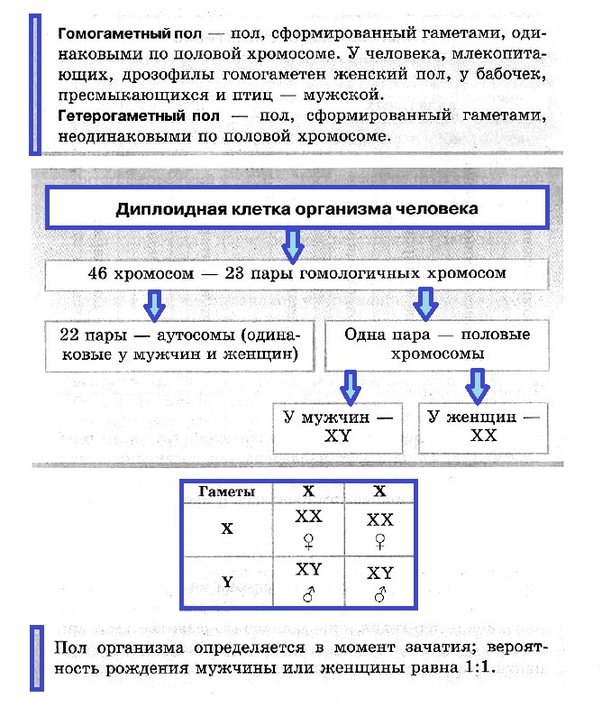 Хромосомы: строение, функции. число хромосом - учительpro