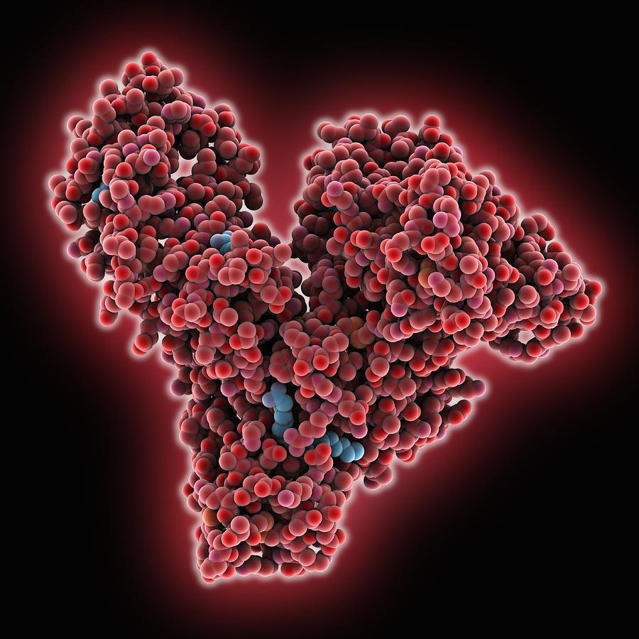 Альбумины: что это такое, норма в крови, причины повышения и снижения уровня белков