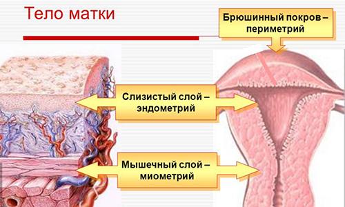 Эндометрит: причины возникновения, симптомы, диагностика и лечение в москве