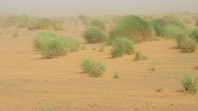 Суховей — горячий ветер   terasfera