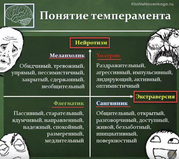 Флегматик: характеристика и описание темперамента