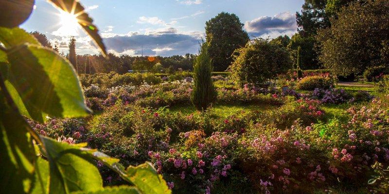 Розарий на дачном участке, устройство и оформление правильного розария, дизайн красивого дачного розария