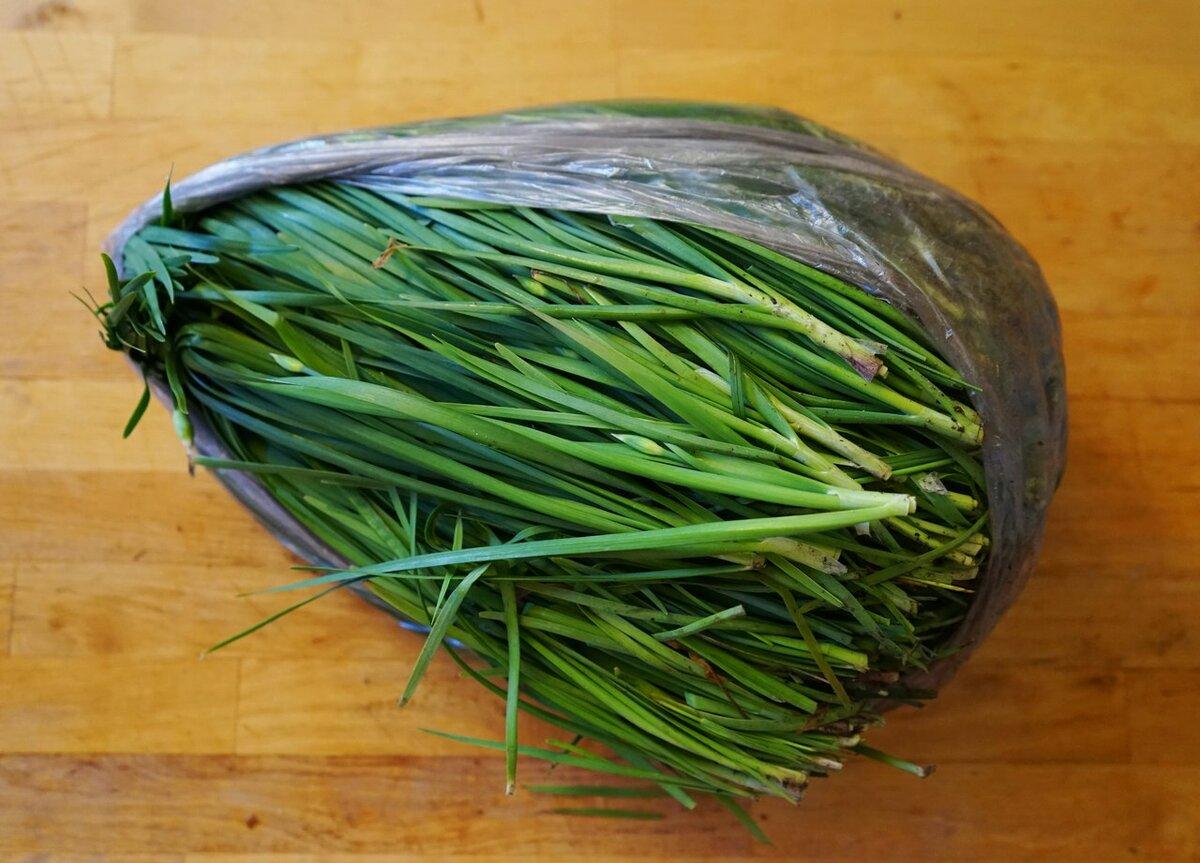 Как выращивать лук джусай своими руками на даче - советы