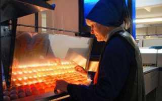 Овоскоп: что такое, как проверить яйца с помощью прибора