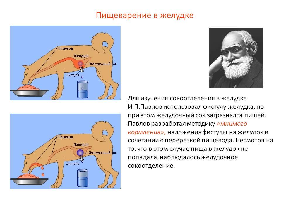 Вести с полей: кто и как применял качественные методы в ux research для разработки it-продуктов. часть 2 из 6 / блог компании собака павлова / хабр