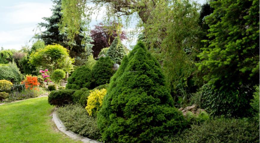 Классификация растительности