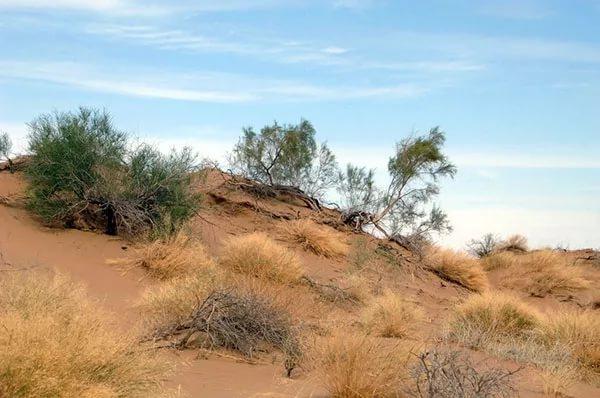 Опустынивание земель в россии: примеры, регионы, причины и пути решения проблемы