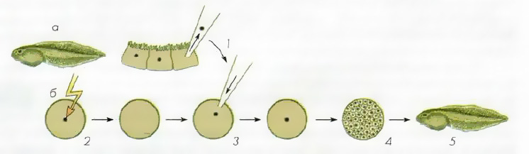Что такое клонирование растений и зачем это нужно?