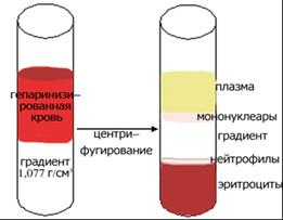 Газовая центрифуга — википедия. что такое газовая центрифуга