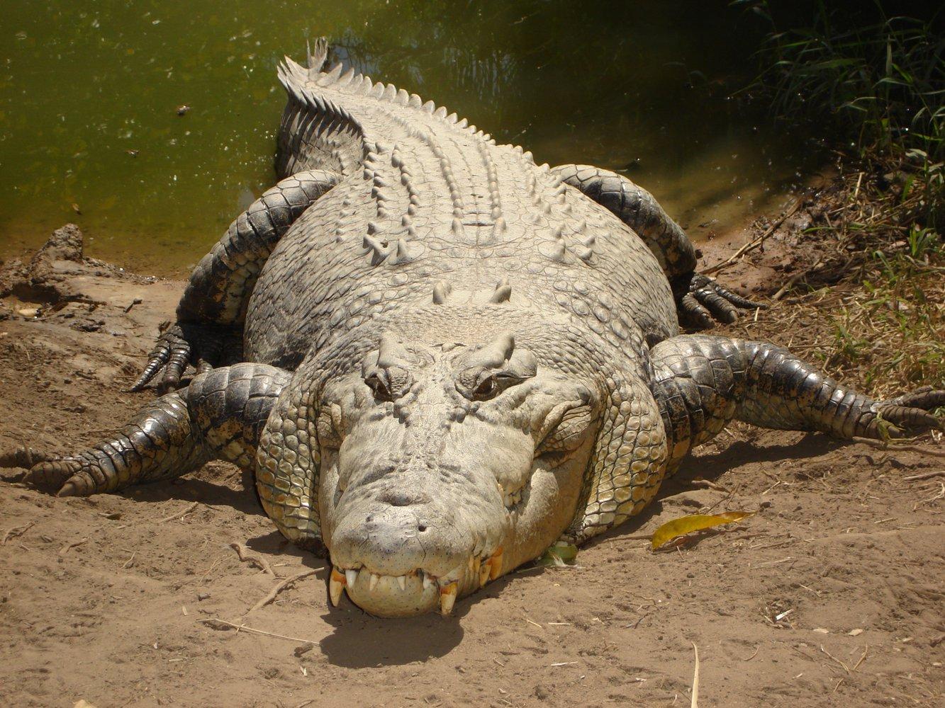 Крокодилы: виды,описание,фото,образ жизни,обитание | аквариумные рыбки