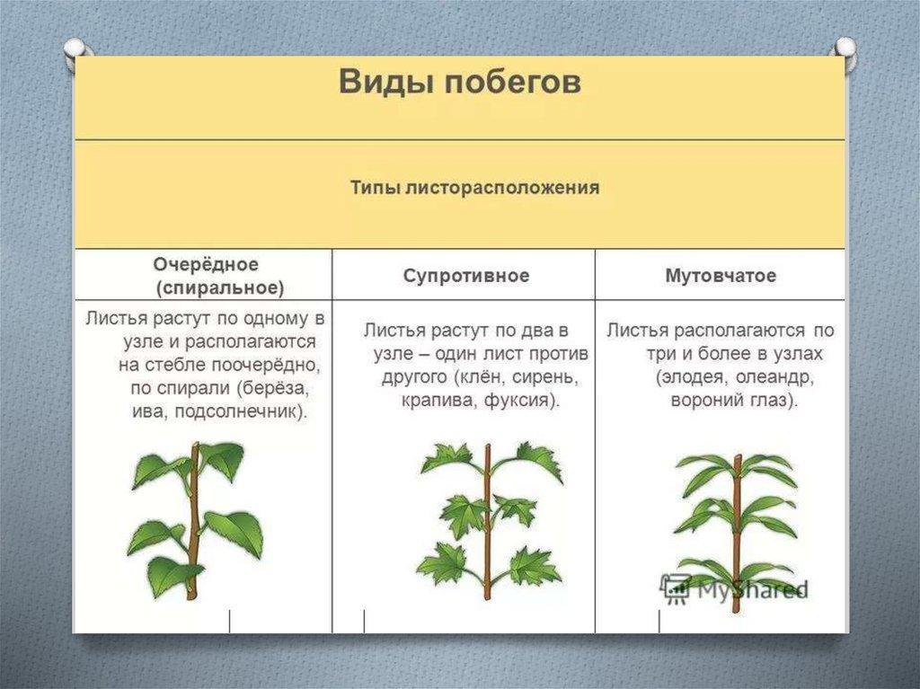 Биология и медицина