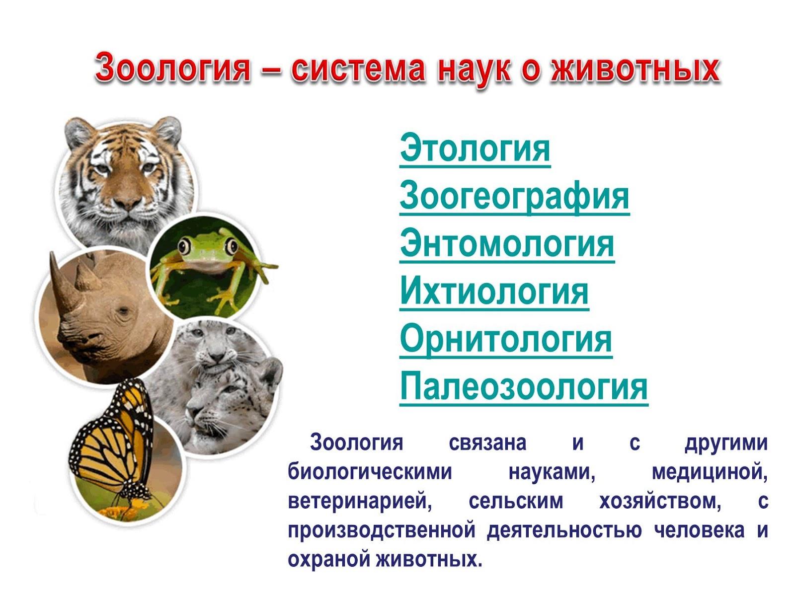 Зоология — википедия. что такое зоология