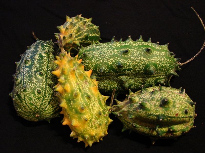 Кивано: что это такое, описание растения и плода, полезные свойства - sadovnikam.ru