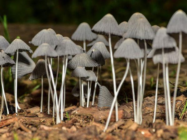 Сапрофиты. грибы-сапрофиты