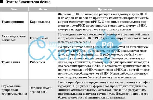 Что означает транскрипция в русском языке. транскрипция в биологии - это что такое