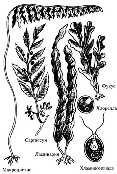 Многообразие растений. основные отделы растений. классы покрытосеменных. роль растений в природе и жизни человека / справочник :: бингоскул