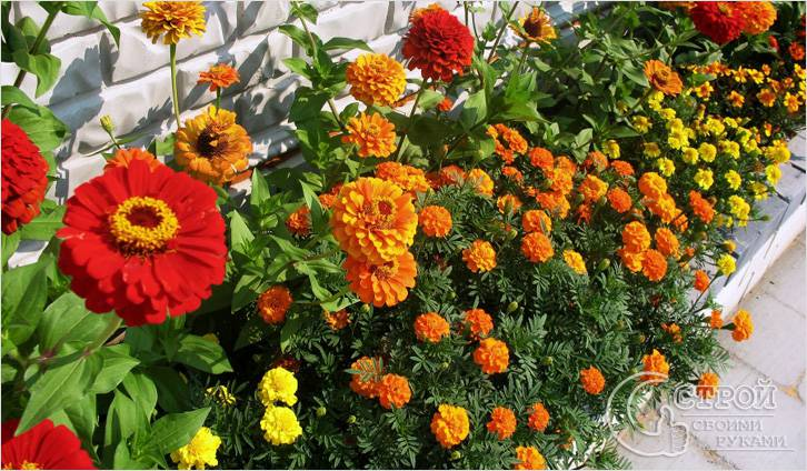 Красивые палисадники: топ-140 фото лучших вариантов палисадников. разновидности конструкций, выбор растений, оформление своими руками