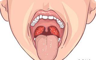 Это должен знать каждый! значение шишковидной железы. за что отвечает шишковидная железа головного мозга