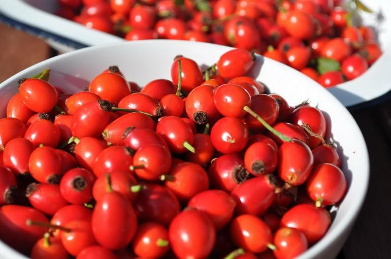 Шиповник — это один из самых лечебных плодов: польза и вред царь-ягоды