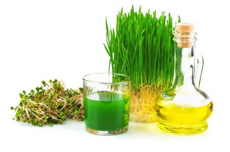Витграсс — использование и приготовление сока из ростков пророщенной пшеницы, выращивание в домашних условиях