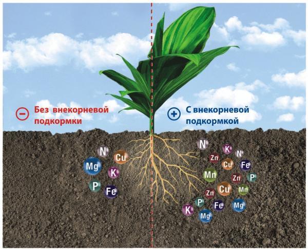 Как использовать минеральные удобрения и их основные виды | вокругсада.ру