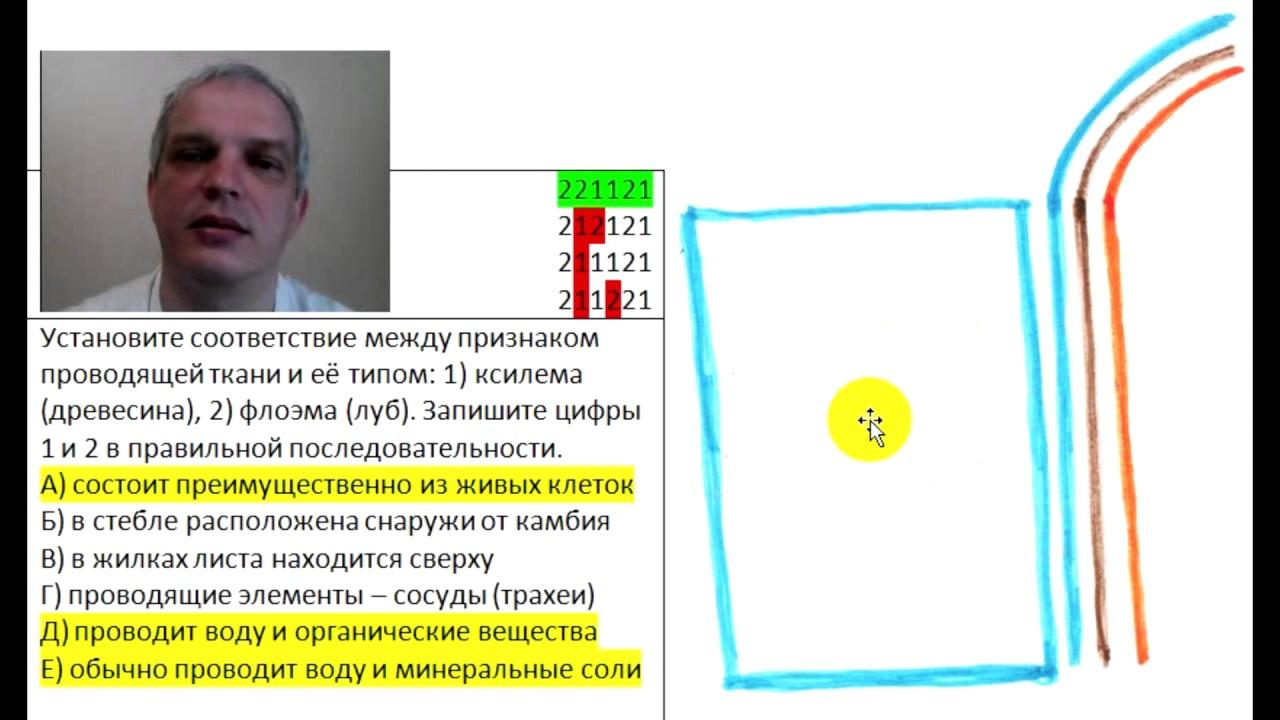 Ксилема - xylem - qwe.wiki