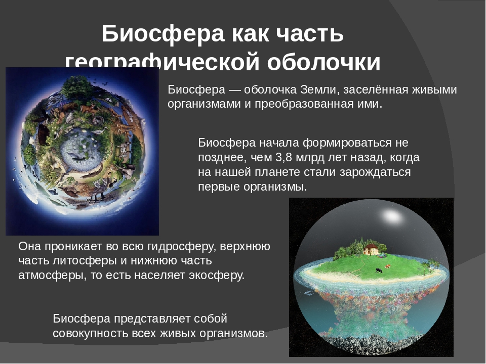 Что такое биосфера и какое у неё строение