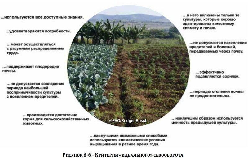 Какая почва самая плодородная - основные виды и их влияние на урожайность, методы по улучшению структуры