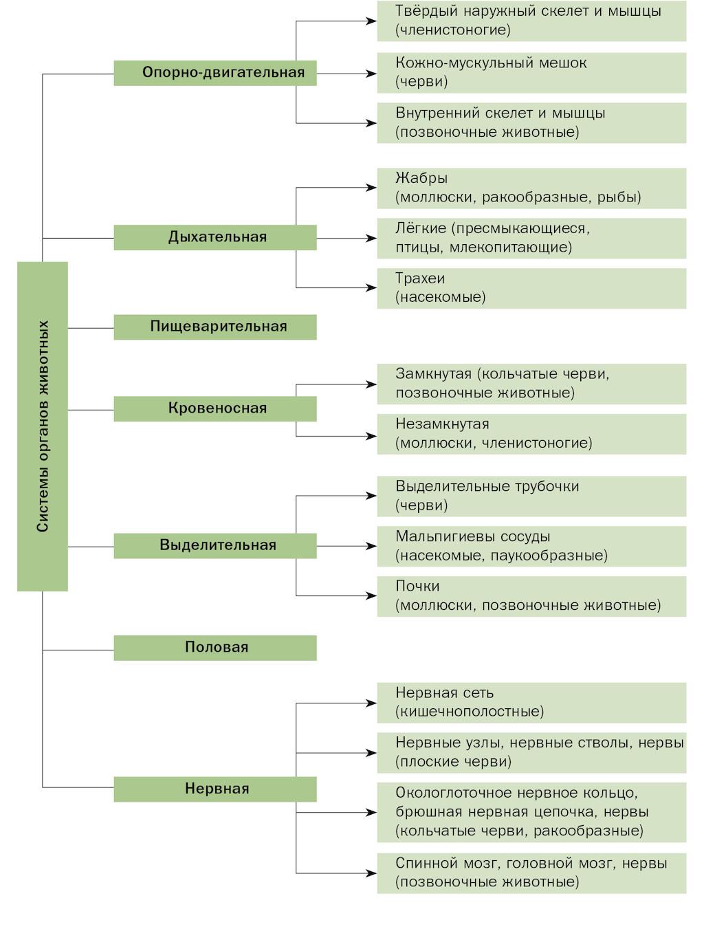 Эндокринная система человека: функции, органы, гормоны, болезни