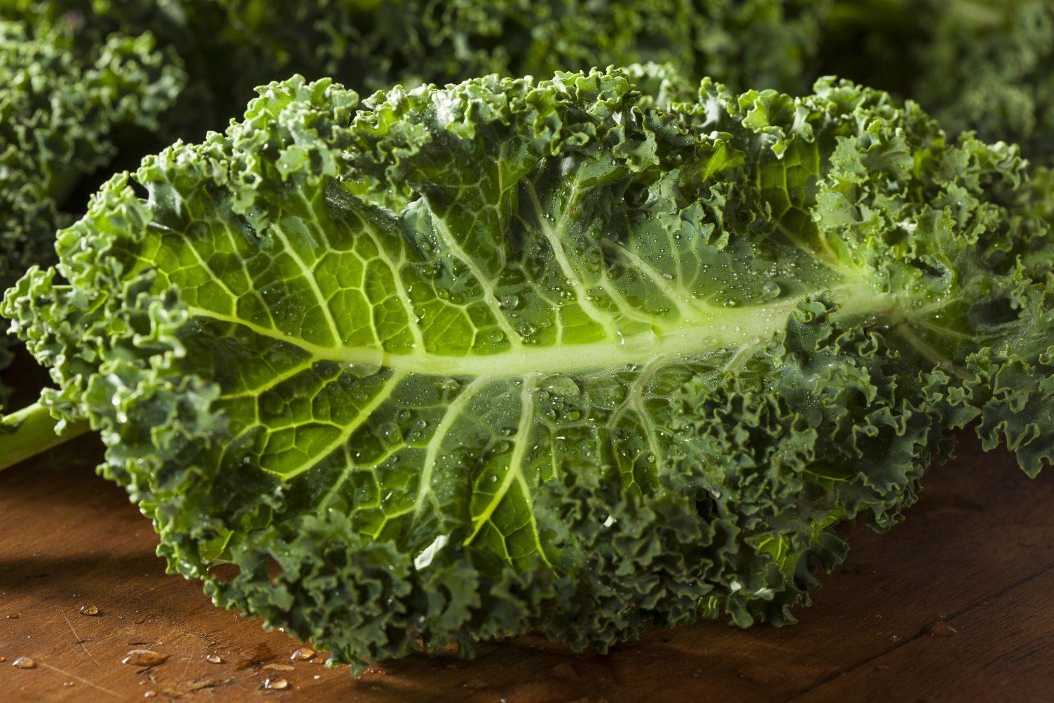 Красивая, полезная и вкусная листовая капуста кале – сорта, особенности выращивания