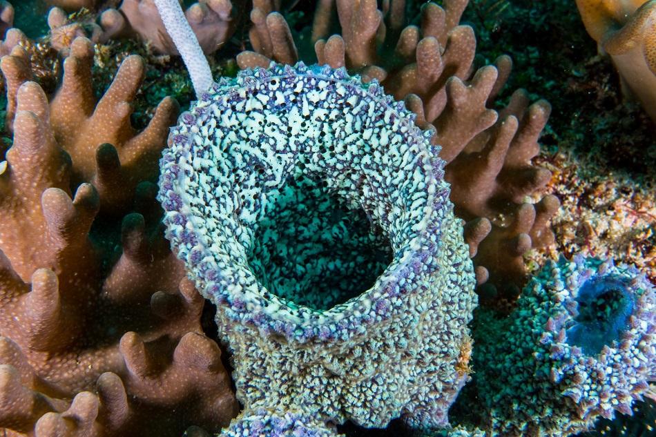 Морской минерал — коралл: характеристики, свойства, кому подходит
