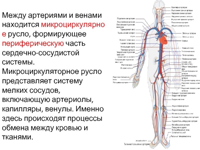 Сосуды головного мозга: cимптомы, лечение, народные методы. сужение, спазмы, атеросклероз