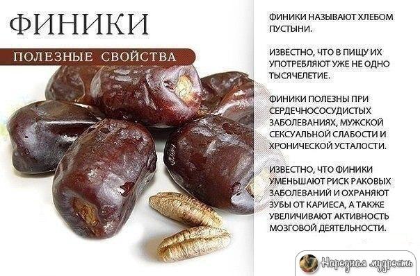 Финики – сухофрукты долголетия, полезные свойства и влияние на организм