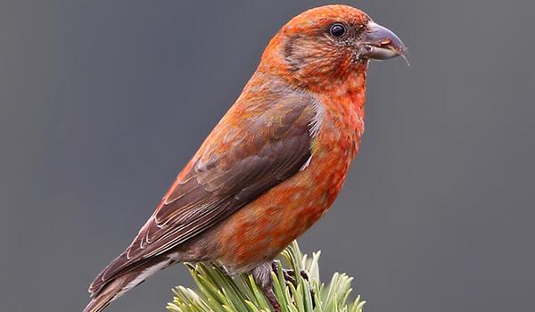 Тупик (птица) — википедия. что такое тупик (птица)