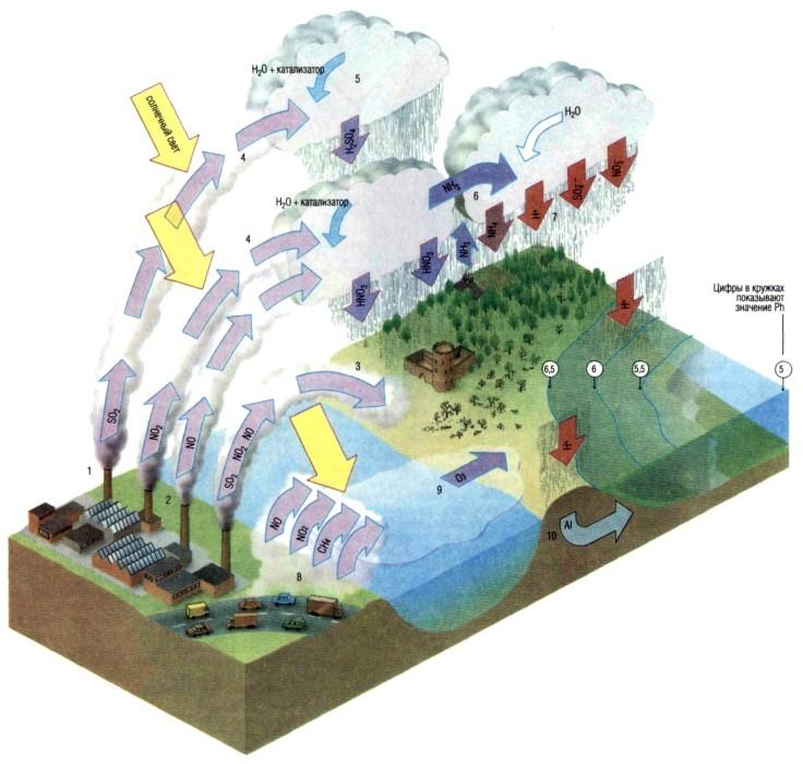Дождь: что это такое, как образуется, виды, интересные факты