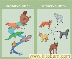 Макроэволюция в биологии: закономерности, отличие от микроэволюции